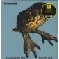 BRAINCHILD ( LP )  UK